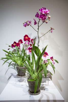 primary-How-to-mount-an-Orchid---Fern--Epiphyting-1482937988