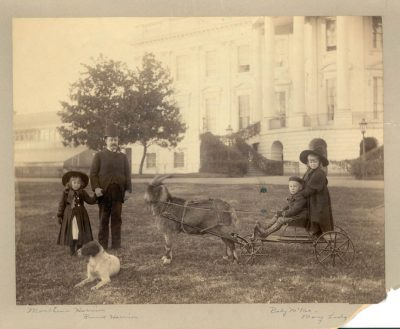primary-Presidential-Pets---Exhibit-Grand-Opening-1484762674