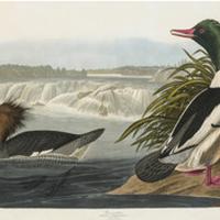Audubon Public Tour