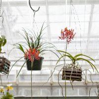 Make a Simple Macramé Plant Hanger