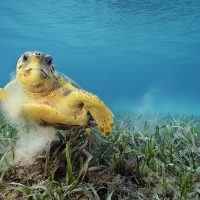 National Geographic Live: Ocean Soul with Underwater Photographer Brian Skerry