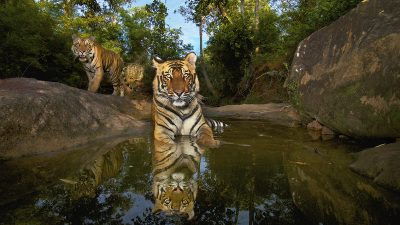 National Geographic Live: On the Trail of Big Cats with Wildlife Photographer Steve Winter