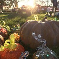 9th Annual Great Glass Pumpkin Patch
