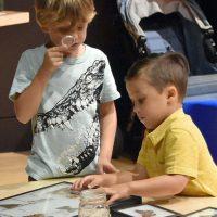 Little Learners: Butterflies & Bees