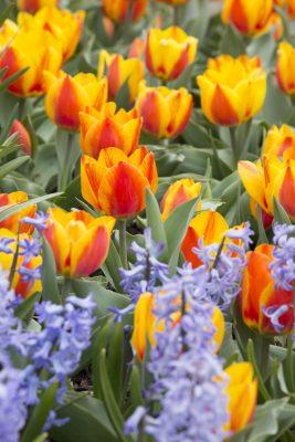 Spring Blooms 2019