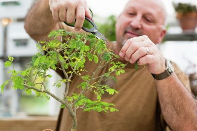 Adult Class: Beginner's Bonsai