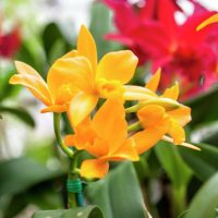 Adult Class: Orchid Basics