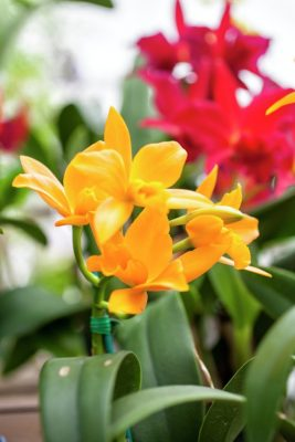 Adult Class: Orchid Basics