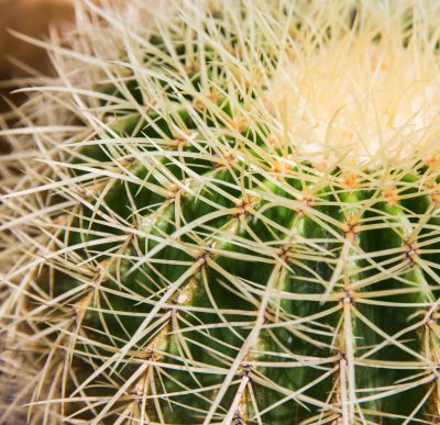 Adult Class: Cacti Care