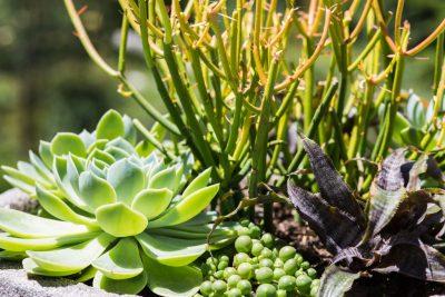 Adult Class: Succulent Planter