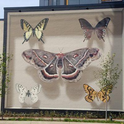 Shadowbox Butterflies