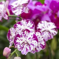 Member Lecture: Spring Horticulture Panel
