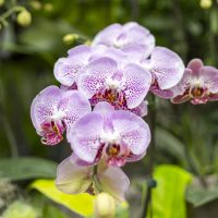 Advanced Orchid Care