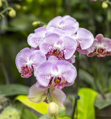Advanced Orchid Care