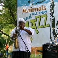 Animals and All That Jazz