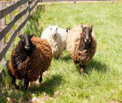 Shear Fun!