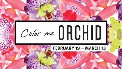 Color Me Orchid